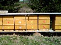 Med vyžene z těla i stafylokoky