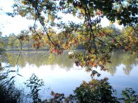 Chlorella – sladkovodní zelená řasa s optimálními účinky na organismus