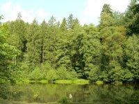 Létem to nekončí, klíšťata jsou aktivní i na podzim (Ordinace.cz)