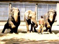 Zvířata žijící v Africe