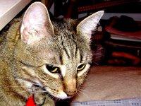 Naše kočky a koťata